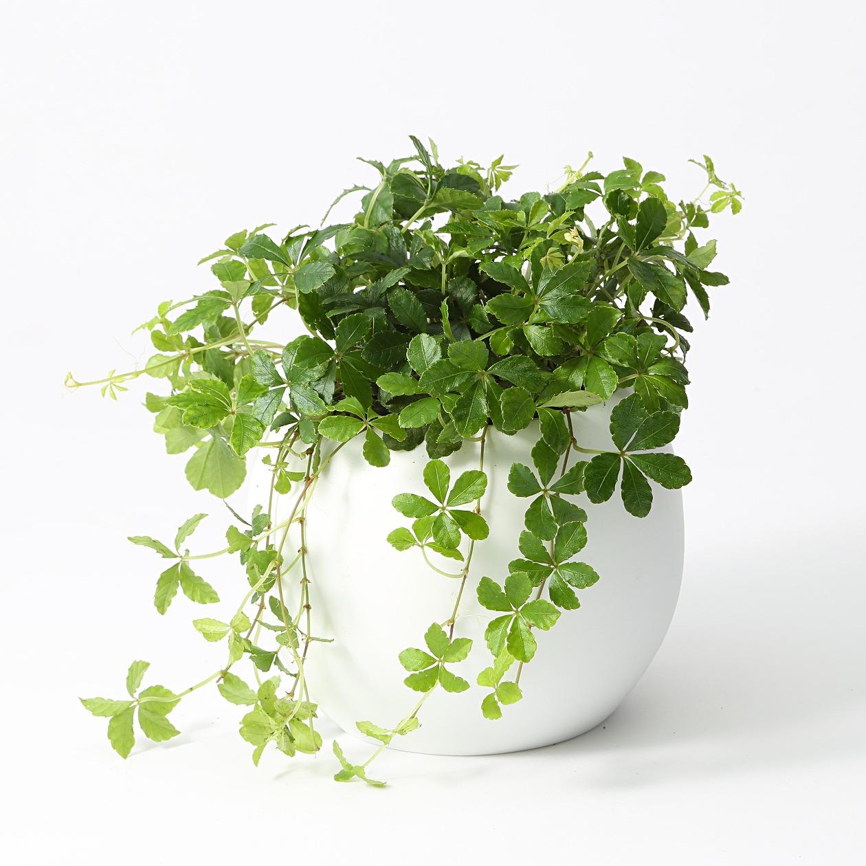 s-無印の植物